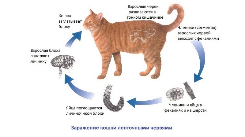 CATS  Cat Advice  Cat Information  Cat Pictures  CATS