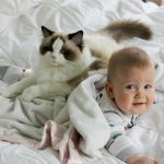 Лучшие породы кошек для детей: какую выбрать?