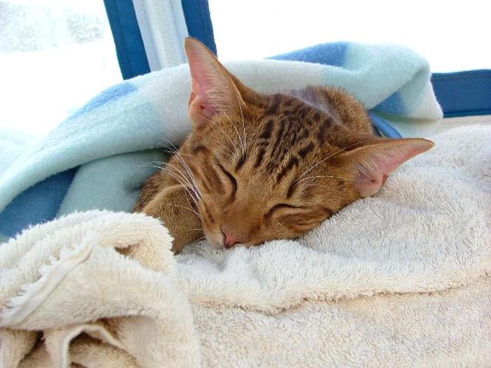 Понос у кошки причины и лечение в домашних условиях 359