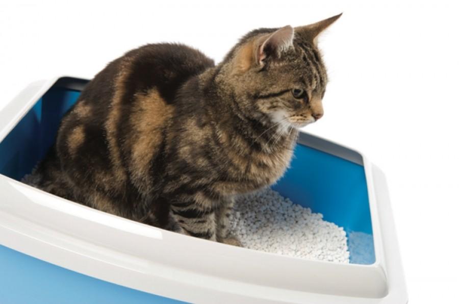 «Мочекаменная болезнь у кошек - правила лечения» фото - Mochekamennaja bolezn 1