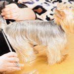 Как подстричь собаку в домашних условиях: подробная инструкция