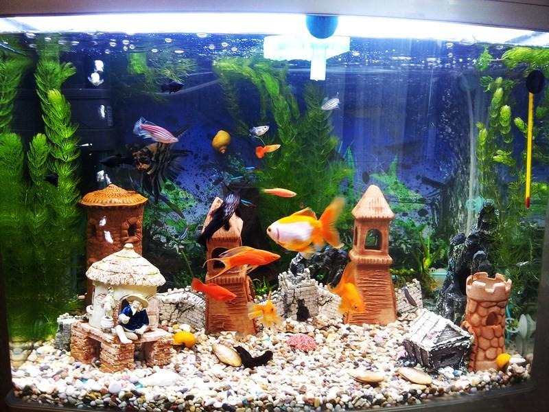 Температура в аквариуме