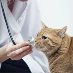 Как вылечить токсоплазмоз у кошек — профилактика и симптомы