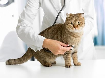 Кошка и ветеринар