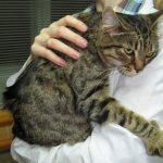 Болезни почек у кошек — симптомы, признаки, лечение и профилактика