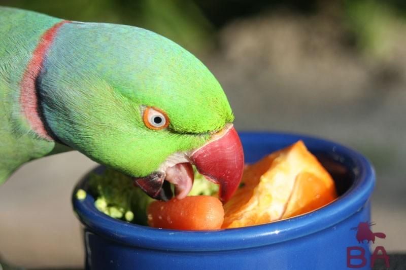 Попугай и овощи
