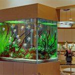 Как выбрать лучший аквариум для вашего дома — советы от профессионалов