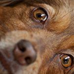 Что делать если у собаки слезятся глаза — причины, симптомы, профилактика и лечение