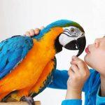 Как научить попугая разговаривать — лучшие методы по быстрой обучаемости попугая