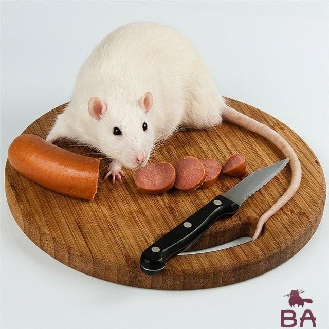 Чем кормить домашнюю крысу белок