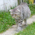 Асцит у кошки — признаки, симптомы, профилактика и особенности кормления в этот период