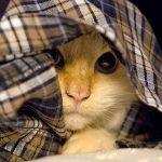 По каким причинам кот может плохо потреблять пищу?