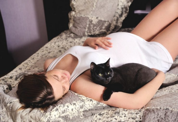 Признаки беременности у кошки