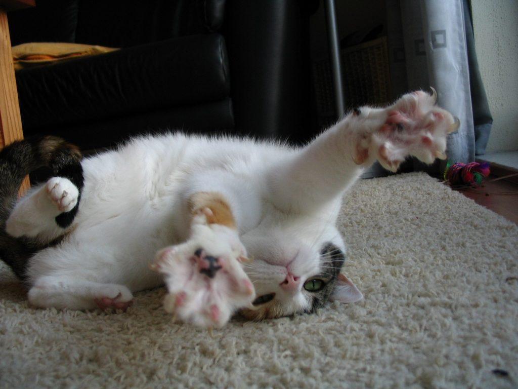 Эпилепсия у кошки симптомы и лечение в домашних условиях 314