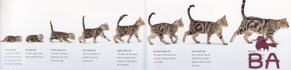 Этапы жизни кота