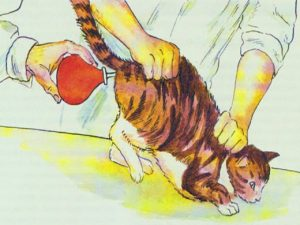 Как сделать клизму кошке в домашних 105