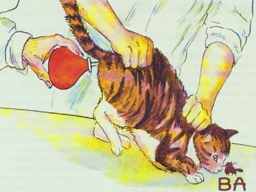 Как сделать клизму котенку в домашних 815