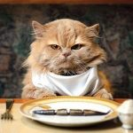 Кошка съедает котят — причины, лечение, симптомы, уход за беременной кошкой