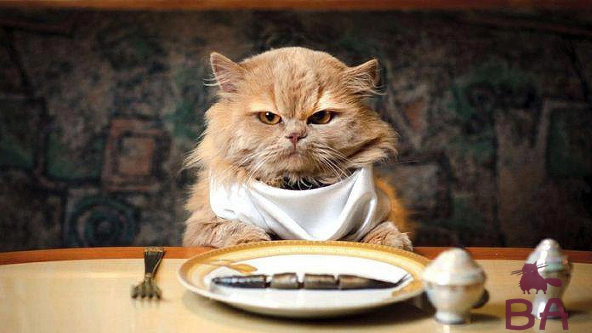 Кошка ест котят