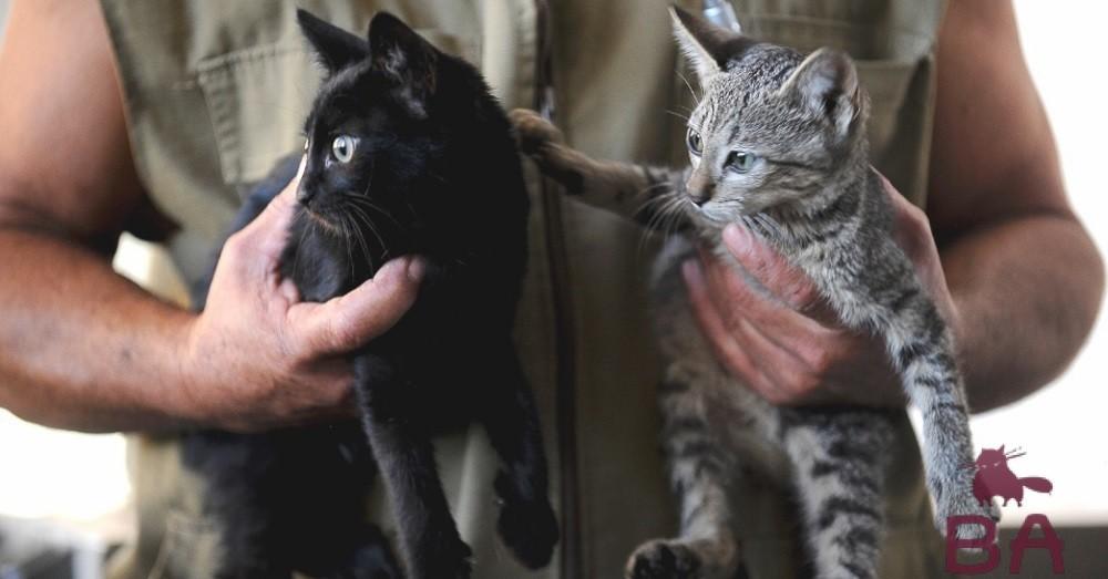 Когда отдавать котенка, передают котенка