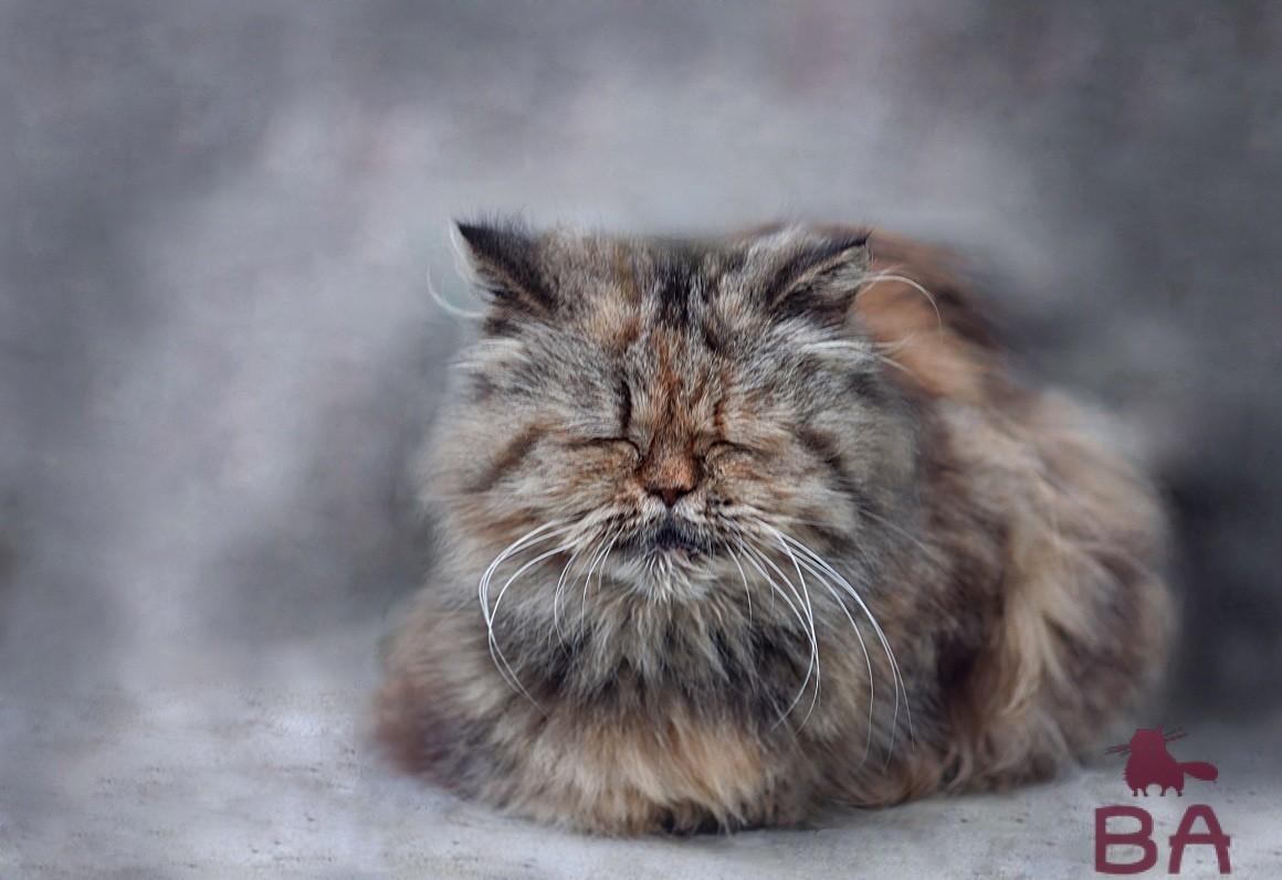 Старый кот, пожилой кот
