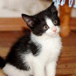 Как подобрать кличку черному котенку: советы