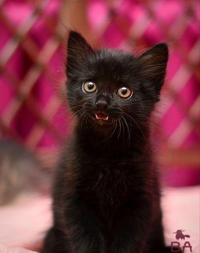 Черный котенок девочка