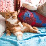 Средняя продолжительность жизни кошек и как её продлить