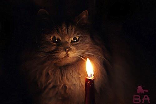 Мистика и суеверия про кошек