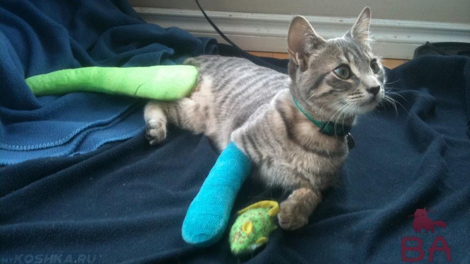 перелома лап у кошек