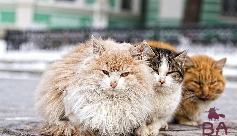 Уличные коты
