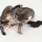 Выделения после родов у кошек разного цвета — профилактика и лечение заболеваний