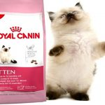 Korm-Royal-Canin