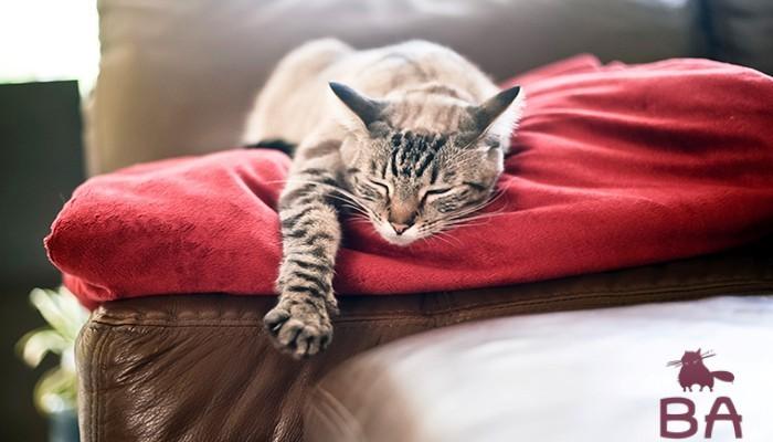 «Сколько часов в сутки должны спать кошки и котята» фото - son koshek5
