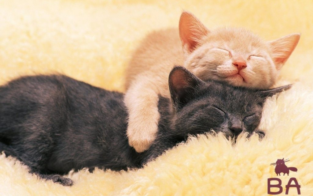 «Сколько часов в сутки должны спать кошки и котята» фото - son koshek98