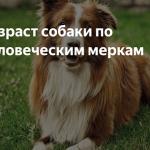 Возраст собак по человеческим меркам — как посчитать