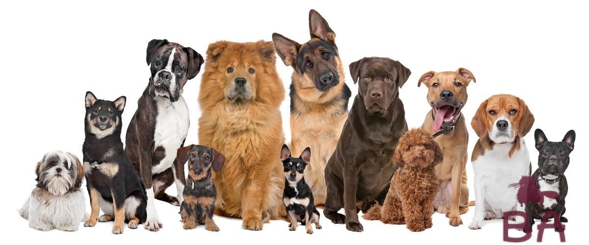 «Как называется порода собаки из фильма Хатико» фото - vse sobaki