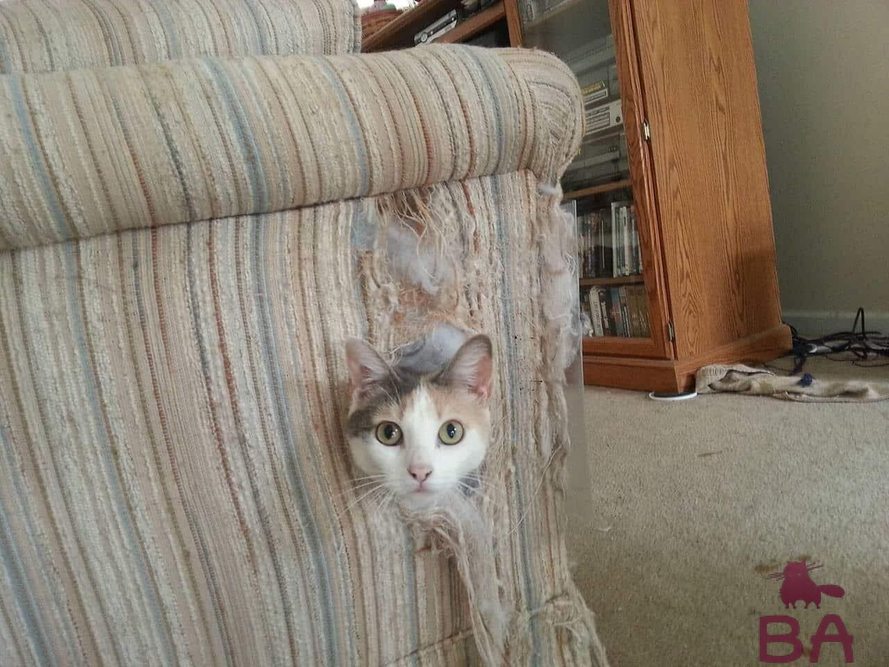 Кошка дерет диван