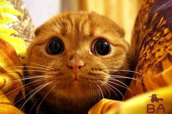 кошка боится
