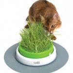 Какая трава подходит для кошек?