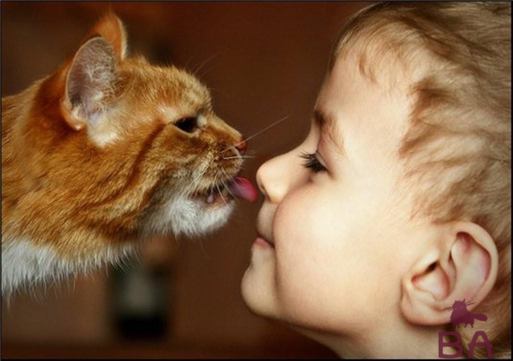Мальчик подружился с кошкой