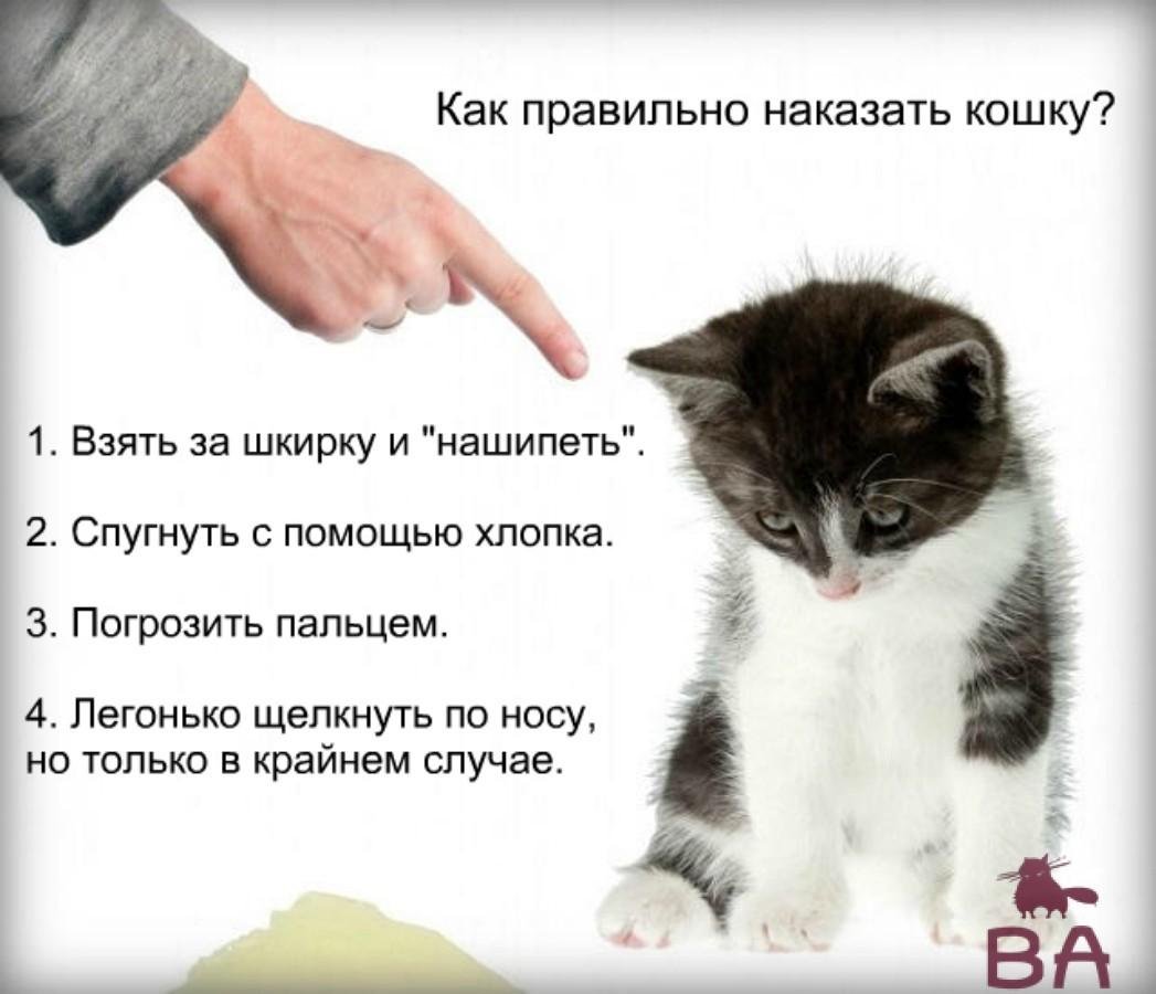 Кошка и рука