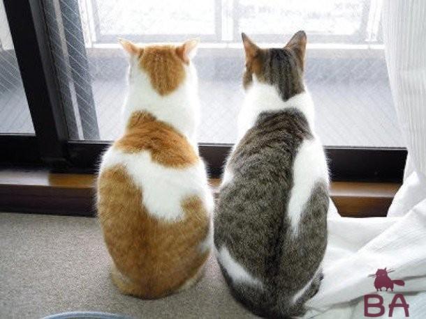 Кошка и кот