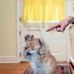 В каких случаях можно наказывать кошку и стоит ли это делать?