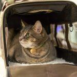 Как нужно перевозить кошку?