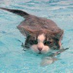Почему кошки так боятся воды — кошачьи инстинкты