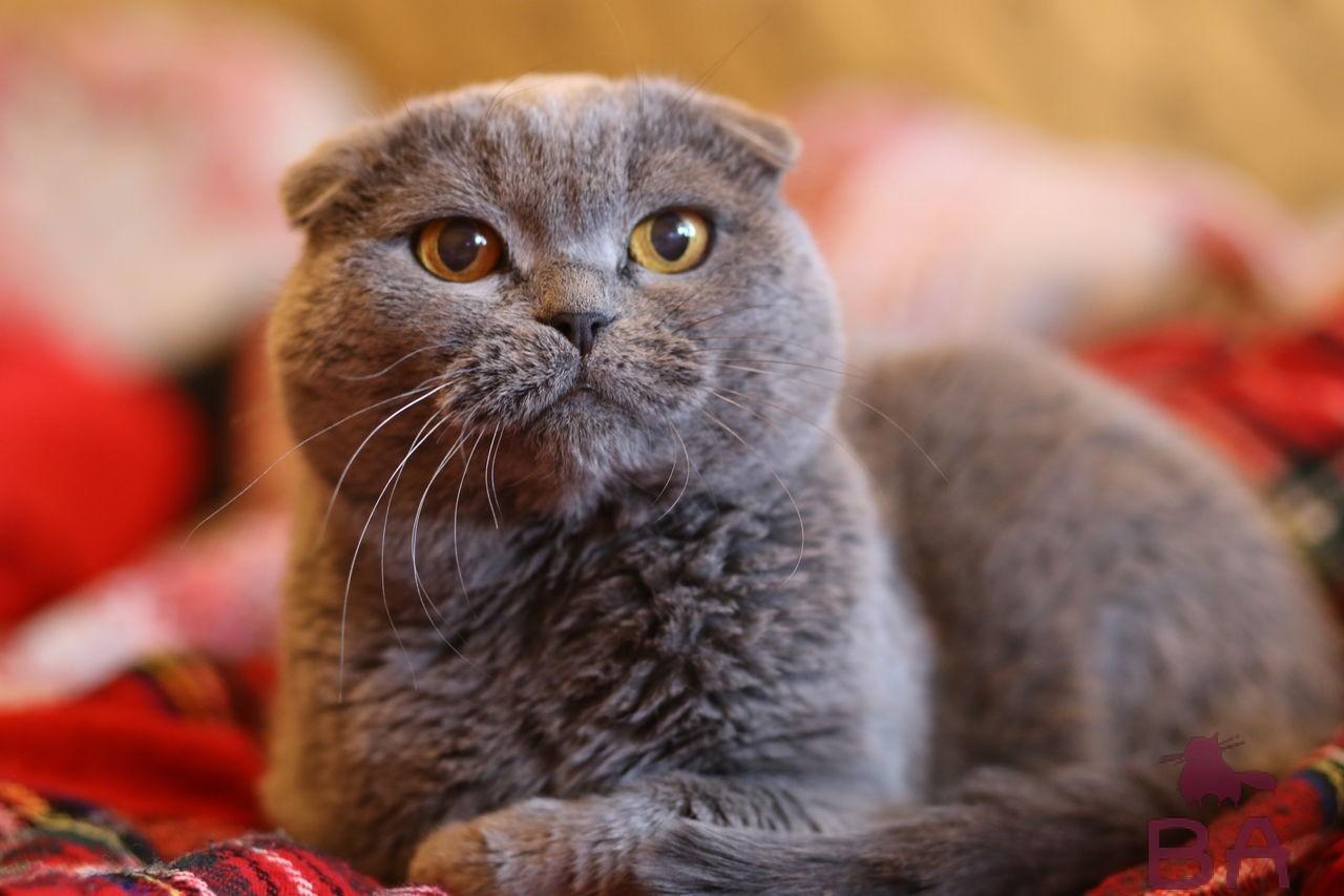 До какого возраста растут коты и кошки