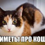 Известные народные приметы про кошек и суеверия