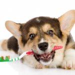 Как чистят собакам зубы — для чего нужна чистка зубов и как ее делать правильно?