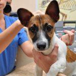 Прививки собакам — для чего нужны и когда нужно их делать?